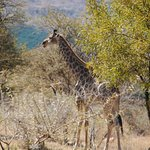Thandile Country Lodge Foto