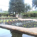 Pond and Landscaped Outdoor Area, Hess Collection Winery & Art Museum, Napa, Ca