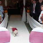 Honey coming down the aisle