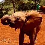 Elephant during playtime!