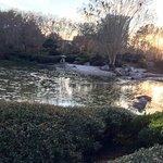 Lovely ponds