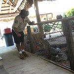 Gator Park Foto