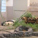 Ueno Zoo Foto
