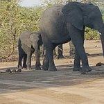 Imbabala Zambezi Safari Lodge Foto