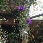 Giardini La Mortella Foto