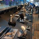 Museum für Naturwissenschaften Foto