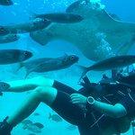 Photo de Submarine Safaris