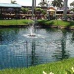 Flamingo Road Nursery Davie, FL 6/2016