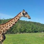 Giraffe's Facebook profile pic ;-)