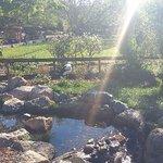 Beautiful scenery and sunray at Safari West