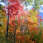 October is fall foliage time, and leaf peepers are welcome in the area.