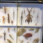 more beetles