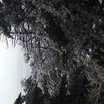 겨울에 방문하시면 아름다운 눈꽃을 보실수 있습니다 백록담은 기대하지 마세요 실망합니다 ㅜㅜ