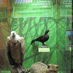 Экспозиция Сочинского национального парка в Дарвиновском музее