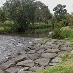 Gardiners Creek Trail