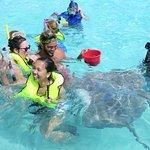Safari raies/requins