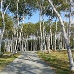 Savary Provincial Park