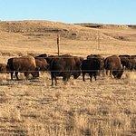 Foto de Terry Bison Ranch