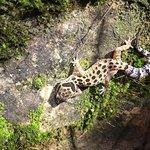 Foto de Phanom Bencha Mountain Resort
