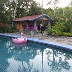 Photo of Pink Flamingo