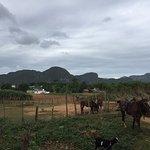 Franks Horses