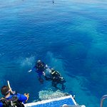 Introductory diver and instructor.