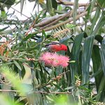 Rose Gums Wilderness Retreat Foto