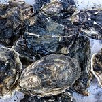 Oysters came all cleaned and ready to shuck