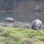 A view from the back of the elephant safari - Chitwan NP