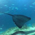 Photo de Oceanografic