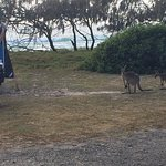Noosa North Shore Beach Campground Foto