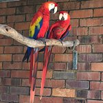 Beautiful birds to be seen at Rainbow Jungle