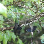 We saw 7 different species of hummingbirds in the trees around the feeders