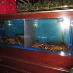 Fresh Lobster Tank