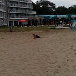 Homeless dogs an the Borjana Hotel