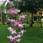 Bilde fra Palmgrove Lake Resort