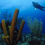 the reef around roatan is a very healthy