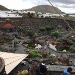 Jardin de Cactus Foto
