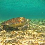 New green sea turtle friend!