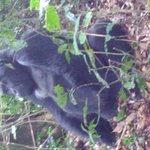 Photo of Gorilla Mist Camp