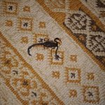 Scorpion found in our room