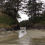 beach in Tofino