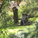 Cedars Mount View Photo