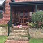 I drove from the country with my dog for the Perth Westie Walkers fancy dress Christmas Party. I