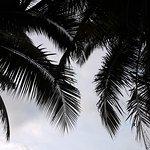 Salad Beach Foto