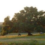 Hill Country Equestrian Lodge Foto