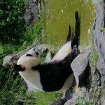 Foto di ZooParc de Beauval
