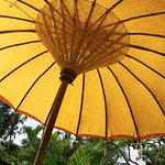 our umbrella