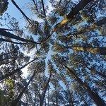 Bosque del camping