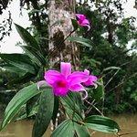 Foto de Cuyabeno River Lodge